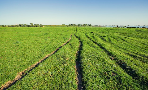Field with grooves on a green meadow