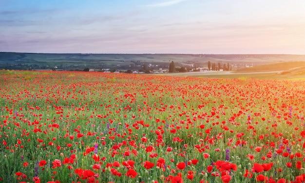 붉은 양귀비가 있는 들판, 일몰 하늘을 배경으로 형형색색의 꽃들