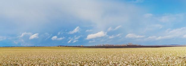 화창한 겨울 날씨에 흰 구름이 있는 눈 덮인 초목과 푸른 하늘이 있는 들판