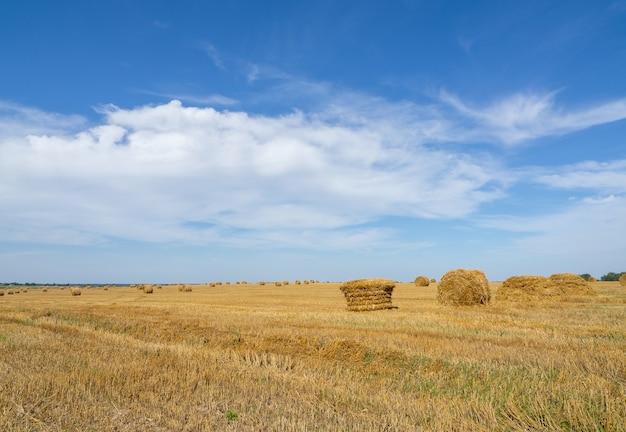 밀, 호밀이 있는 들판. 건초 더미가 있는 농장. 수확의 계절.