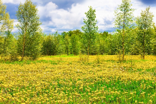 Поле с желтыми одуванчиками, зелеными деревьями и голубым небом