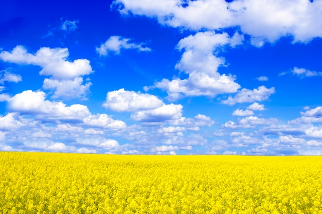 Field with yellow flowers and clouds