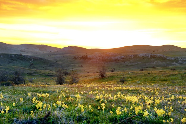Field of yellow flowers with mountains and sunset sky