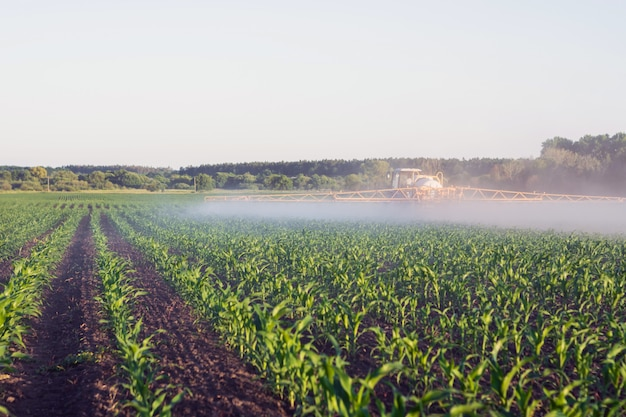 Field of young corn, at the end of which a self-propelled sprayer is deployed