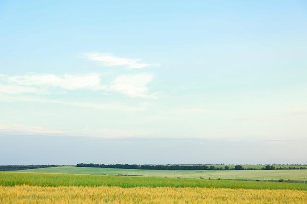 青空、テキスト用のスペースに対するフィールド。農業