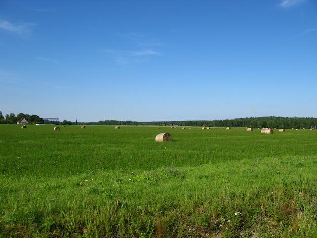 エストニアの畑と森