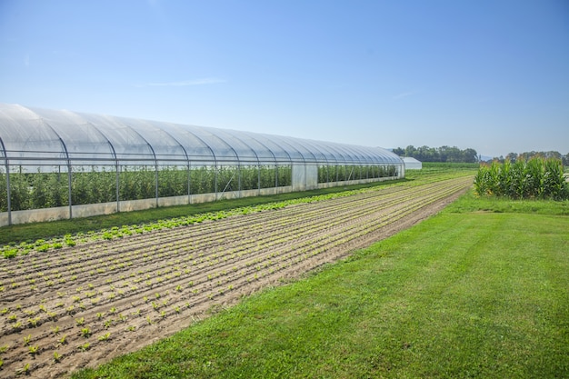 Fields and a greenhouse