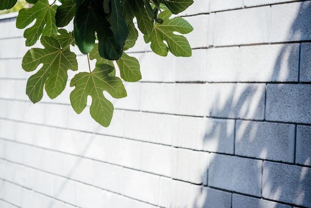 회색 벽 배경에 잎이 있는 무화과나무 가지