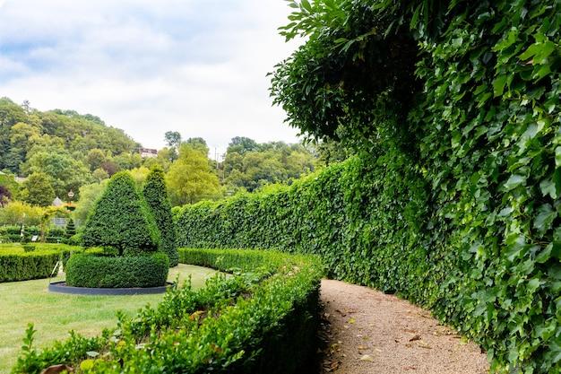 덤불, 유럽의 여름 공원에서 소용돌이 모양과 원뿔 모양의 인물. 전문 원예, 유럽 녹색 풍경, 정원 식물 장식