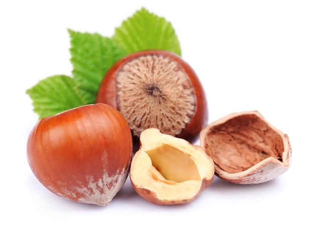 Filbert nuts with leaf on white