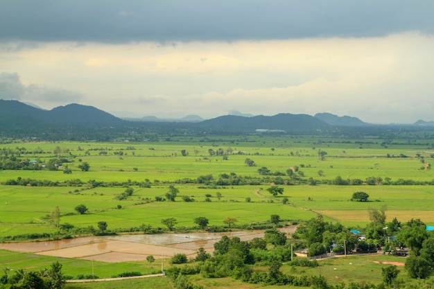 Filed landscape in thailand