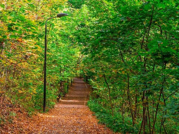 公園の葉の秋の小道でいっぱい。モスクワ。