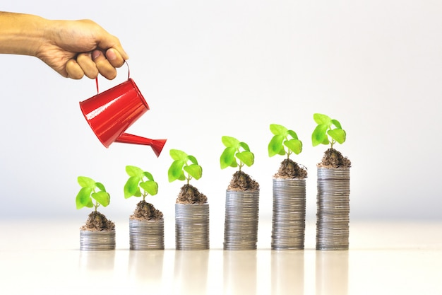 Finance and investment concept - plant growing on money coin stack.