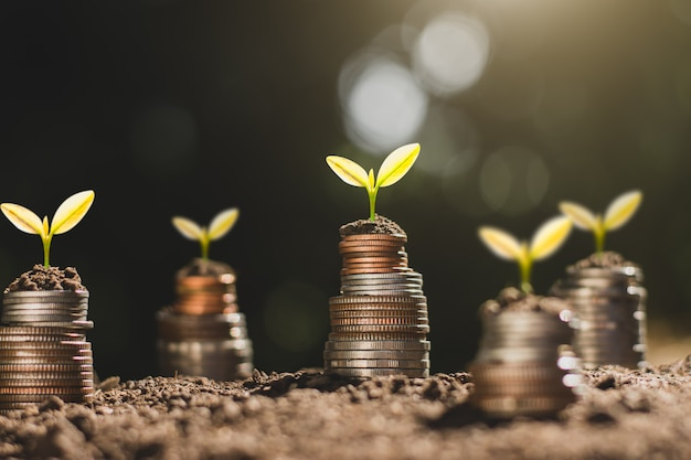Financial growth, coins and seedling.