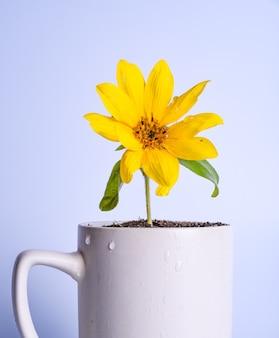財務計画、お金の成長の概念。カップに黄色い花に水をまく女性の手。コピースペース
