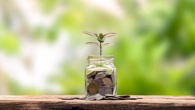 Financial planning and retirement ideas planting a bottle tree to save money on a wooden table and blurred natural green background