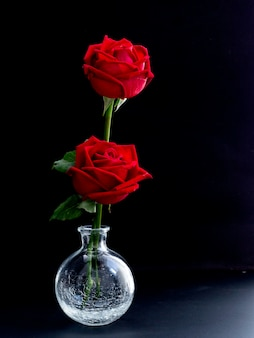 Fine art photography: roses