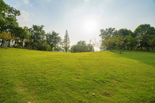 晴天と公園の芝生