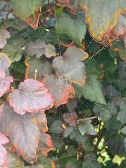 잎에 미세한 흰색 거미줄