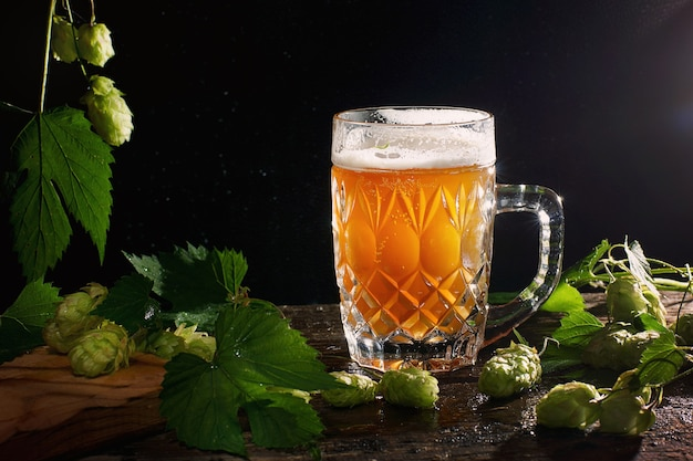 Fine yellow unfiltered beer in a transparent mug on a black background with hop sprouts.