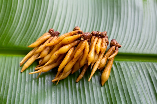 Finger root on banana leaf background.