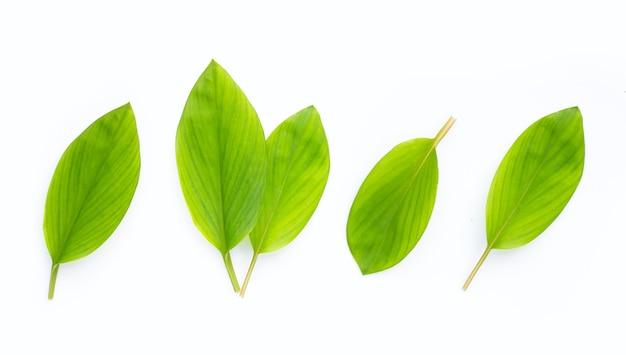 손가락 루트 흰색 바탕에 나뭇잎.