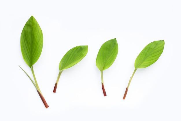 Finger root leaves on white background.