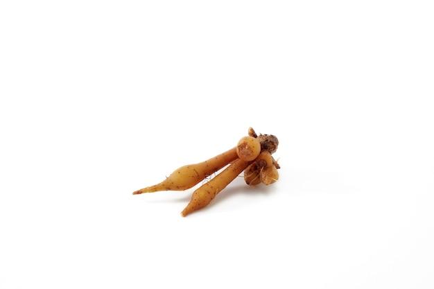배너 디자인에 대 한 질감 흰색 배경에 고립 된 손가락 루트 뿌리 줄기