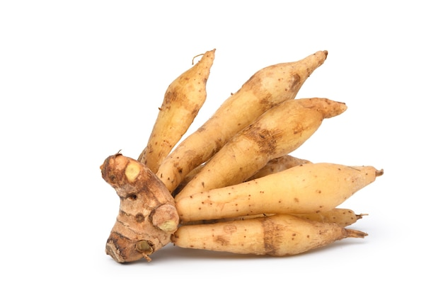 Finger root rhizome isolated on white background. clipping path.