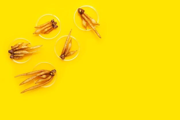 Корень в чашках петри на желтом фоне.