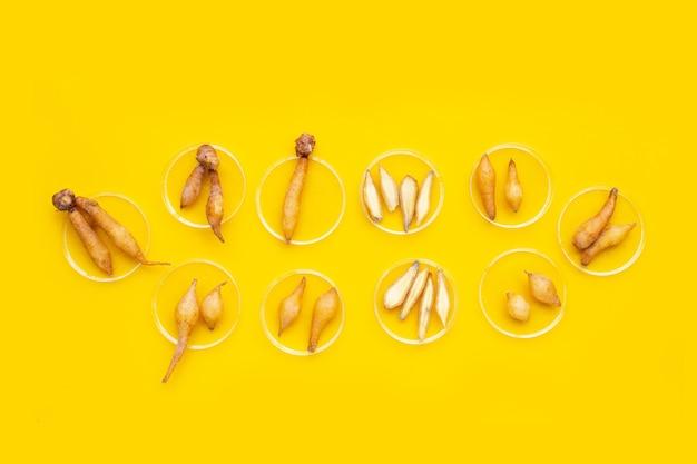 노란색 배경에 페트리 접시에 핑거루트입니다.
