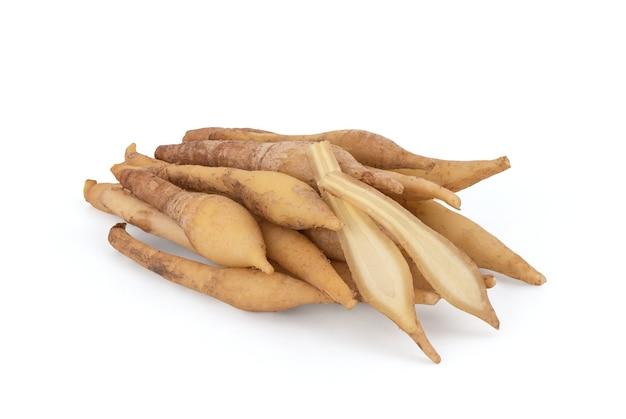 Fingerroot 또는 galingale 뿌리 줄기 흰색 배경에 고립.