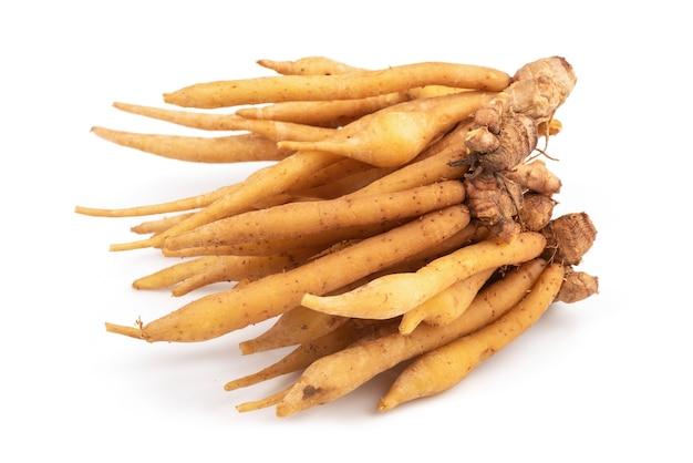 Fingerroot 또는 galingale 뿌리 줄기 흰색 절연.