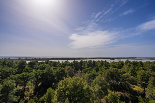 ドローン、湖、松林のある空からのフィンランドの風景
