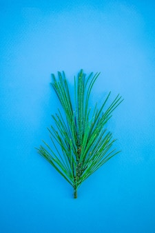 Fir branches on a blue background. new year minimalistic stylish concept, contrasting colors. top view, flat lay, place for text.