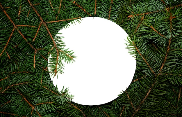 Fir branches with blank circle