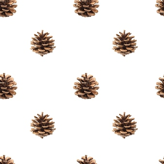 Fir cones isolated on white, with clipping path