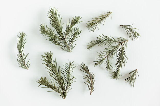 Fir pine branches. christmas tree on the white background. flat lay, mockup. minimalist scandinavian style