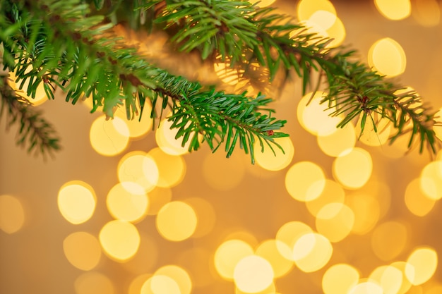 Fir tree branch against golden bokeh  with copyspace