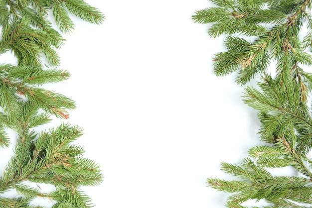 Ветвь ели и конусы, изолированные на белой поверхности.