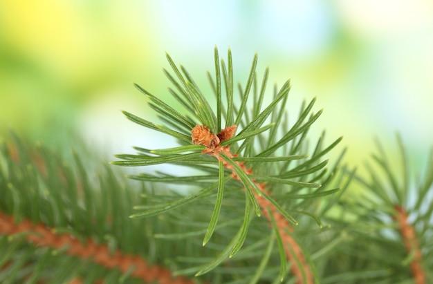 녹색 표면에 전나무 나무 가지