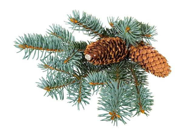 円錐形のモミの木の枝。クリスマスの飾り。