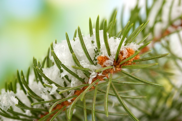 Fir tree branch with snow, on green background