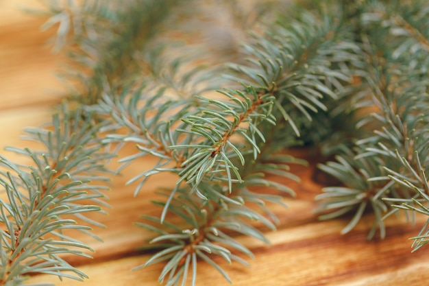 Fir tree branch on wooden background close up
