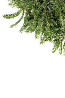白い背景のクリスマスの背景に分離されたモミの木の枝