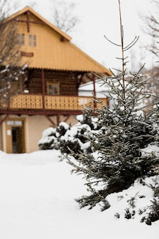 Fir tree and house in winter