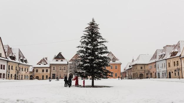 Fir tree in town
