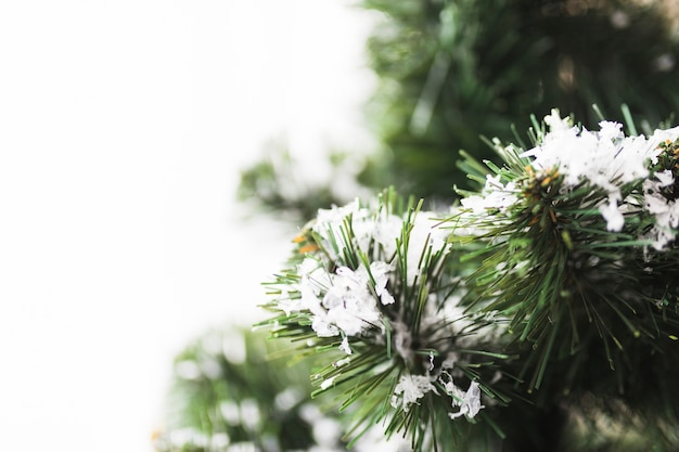 Fir tree with snowflakes on twigs