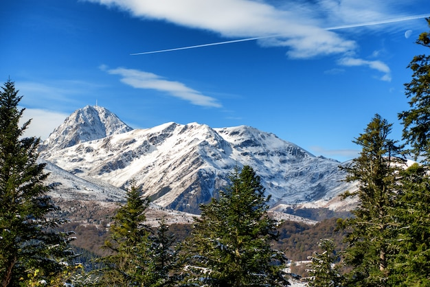 Fir trees in french pyrenees mountains with pic du midi de bigorre