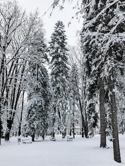 눈, 겨울 구성, 떨어지는 눈으로 덮여 도시 공원에서 전나무 나무
